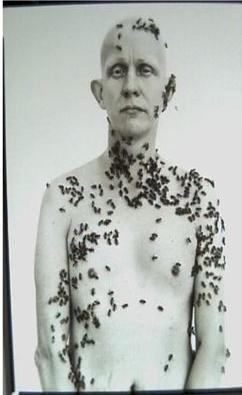 Avadon beekeeper