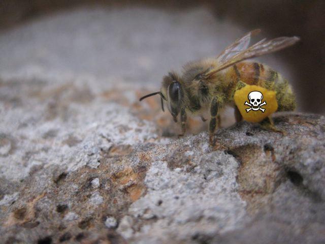Poison pollen